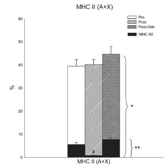 Significant increases shown in total Type II muscle fibre. More importantly, significant increases in Type IIx fibres post detraining.
